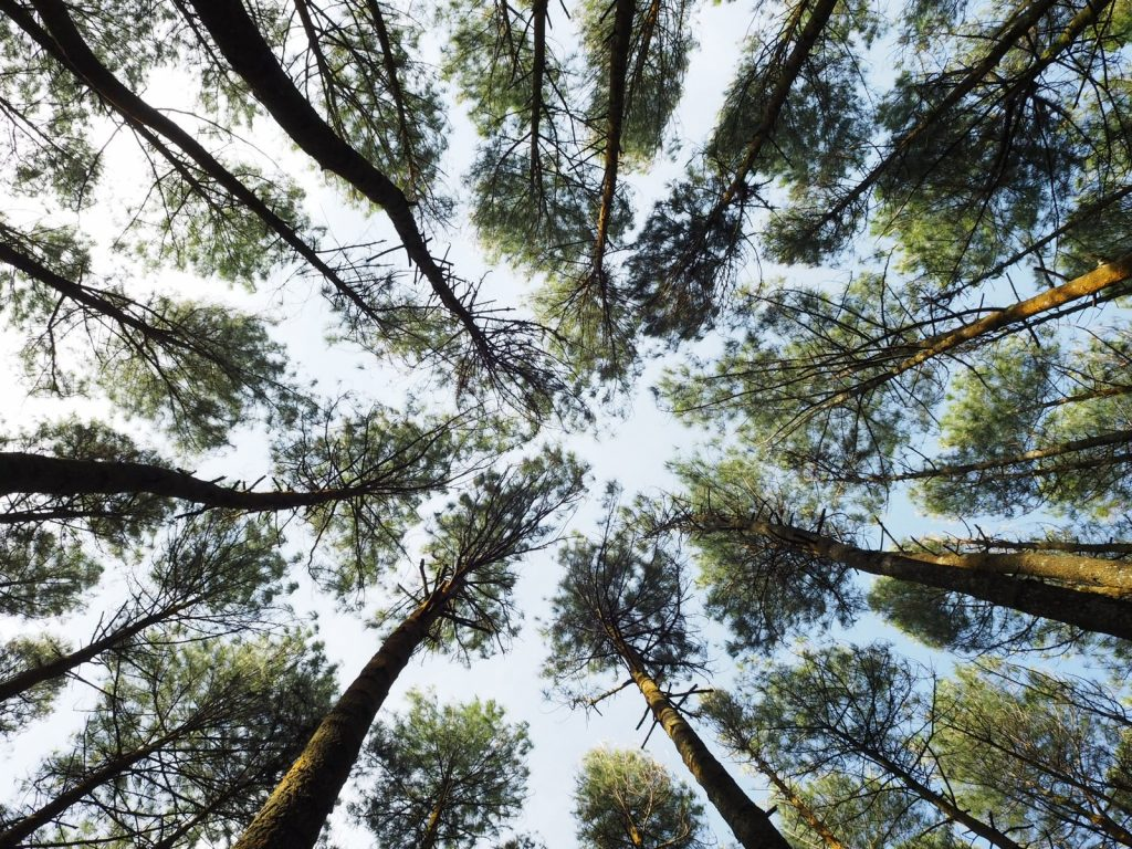 worm's-eye view photography of forest
